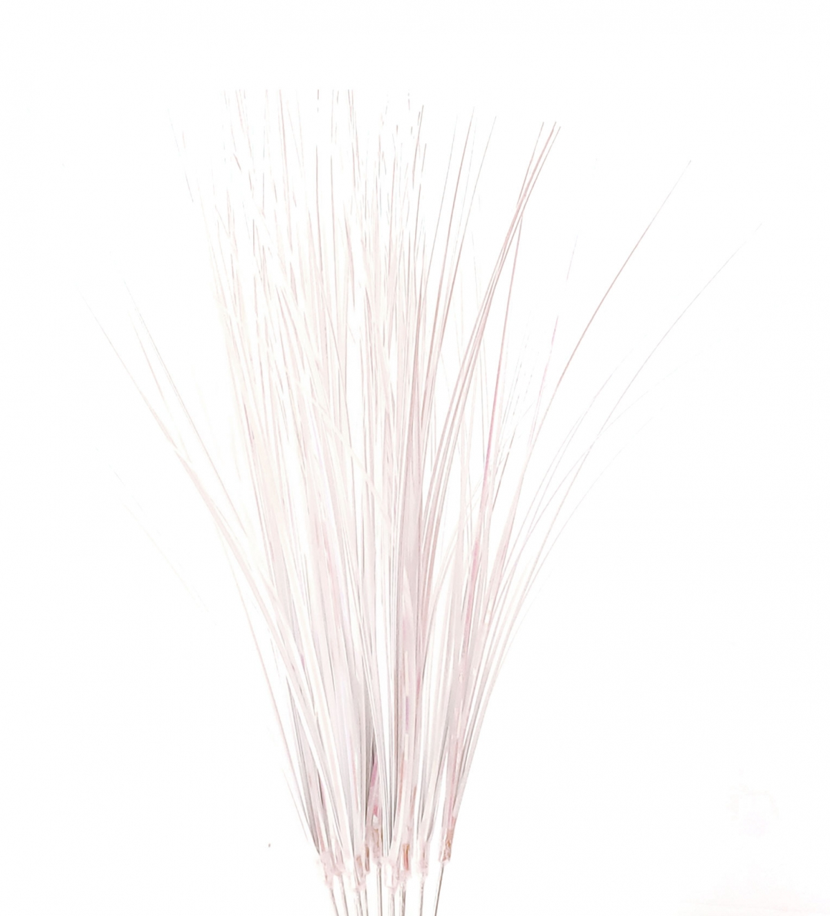 Onion Grass - White Iridescent Floral supplier in Canada ...
